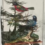 exotic-birds-no-2