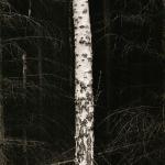 shape-of-trees-2