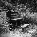 piano-in-the-woods-9-6