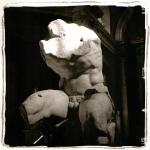 belvedere-torso