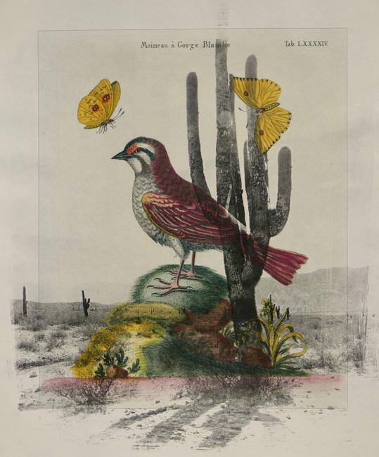 Exotic-Bird-3