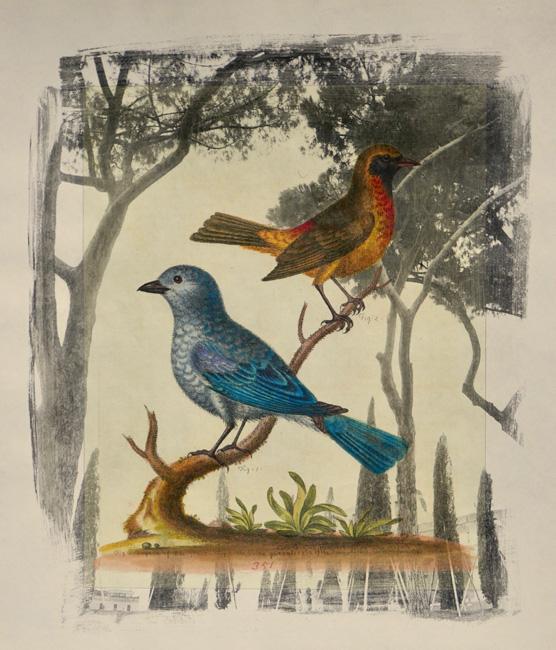Exotic-Birds-6